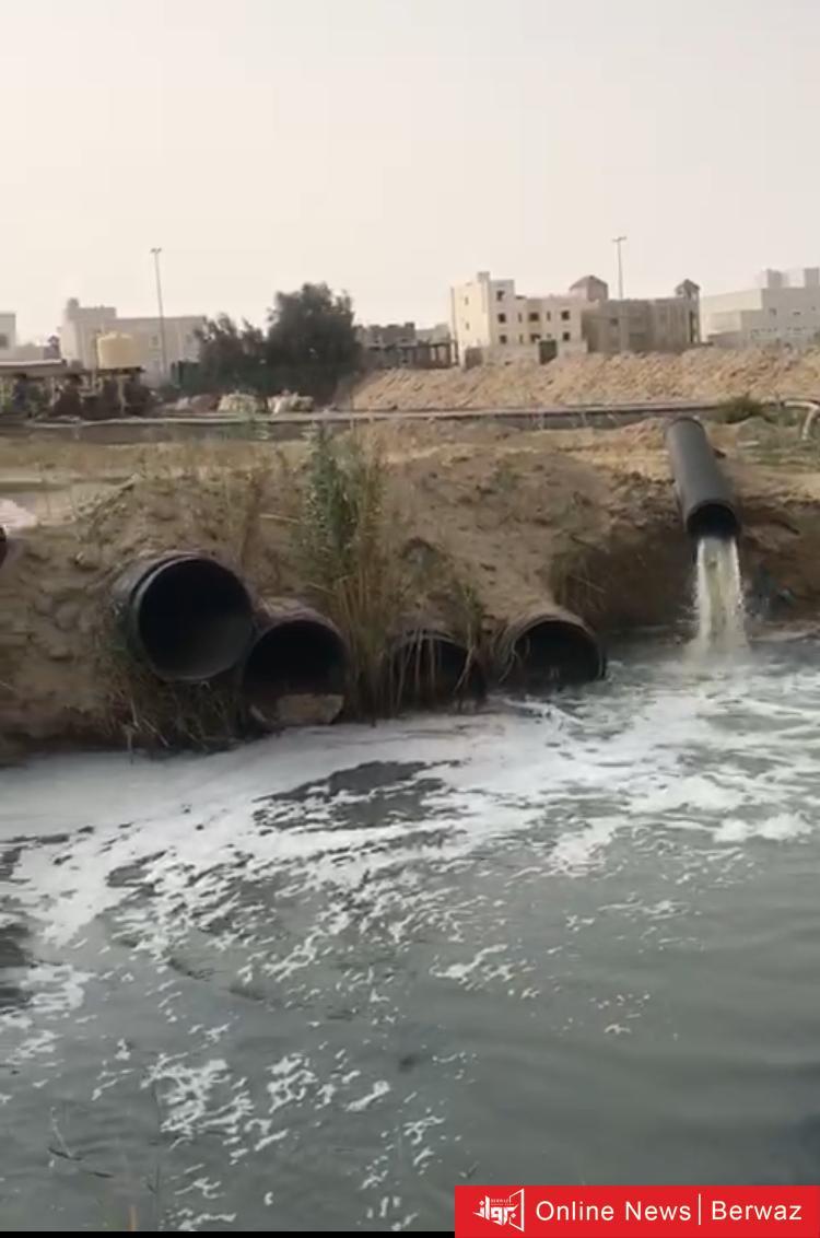 مدينة صباح الاحمد - الحشرات تعود الى مدينة صباح الأحمد و مخاوف سكانها من عدم التعرف على نوعها