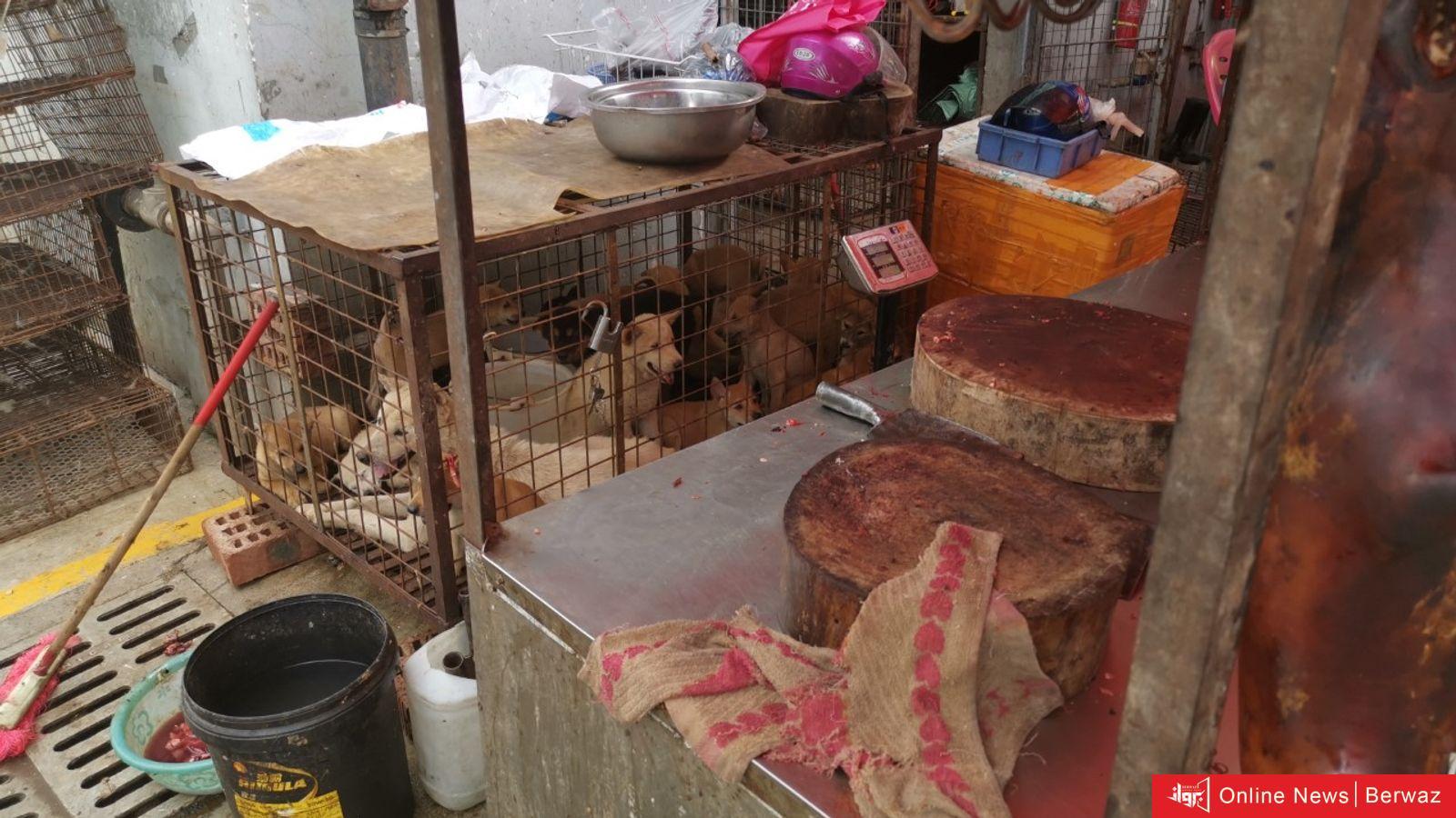 لحم الكلاب معروضًا للبيع في الصين