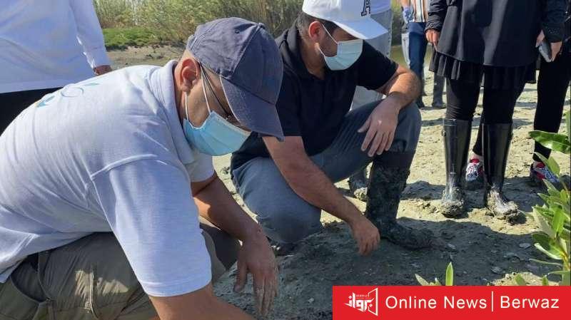 824669 - 240 شتلة جديدة من نبات القرم تزين محمية الجهراء بأمر الهيئة العامة للبيئة
