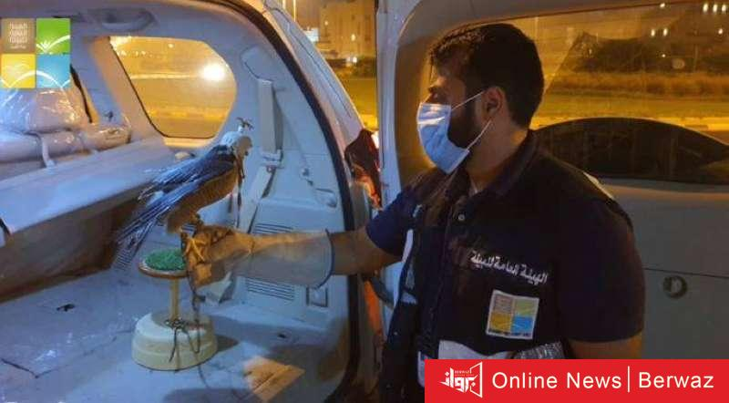 825844 - القبض على عدد من المخالفين تسللوا إلى محمية «صباح الأحمد» وبحوزتهم صقور