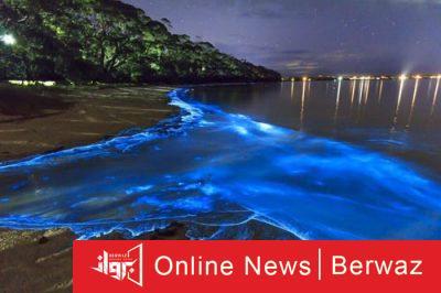 Bioluminescent Bay 400x266 - بورتوريكو بوابة البحر الكاريبى الساحرة