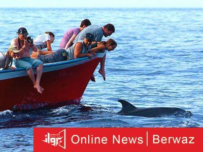 Dolphin Watching 400x299 - جبل طارق المحمية الطبيعية الأشهر فى العالم