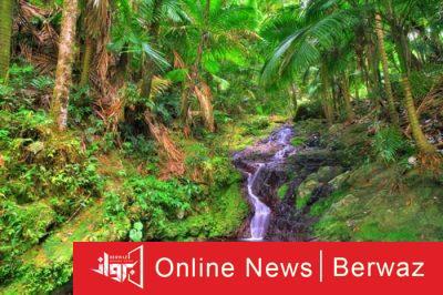 El Yunque National Forest 400x266 - بورتوريكو بوابة البحر الكاريبى الساحرة