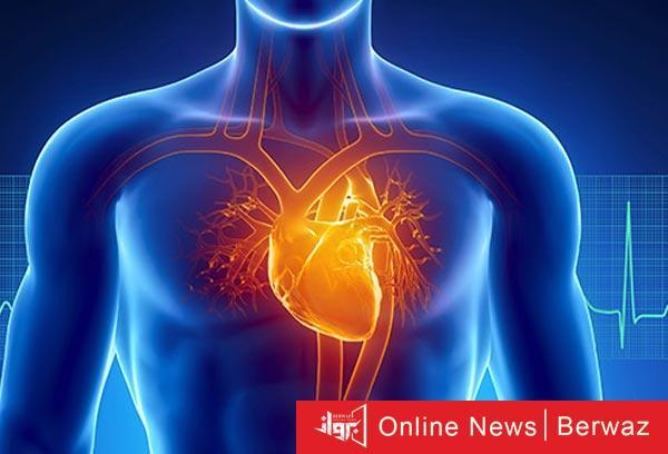 Human heart - ابتكار أول أطلس لخلايا قلب الإنسان