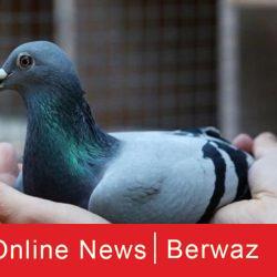 عودة العمالة المنزلية إلى الكويت على دفعات