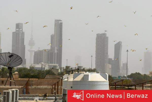 أسراب الجراد - الزراعة الكويتية تعلن خلو المنطقة الشمالية من أسراب الجراد