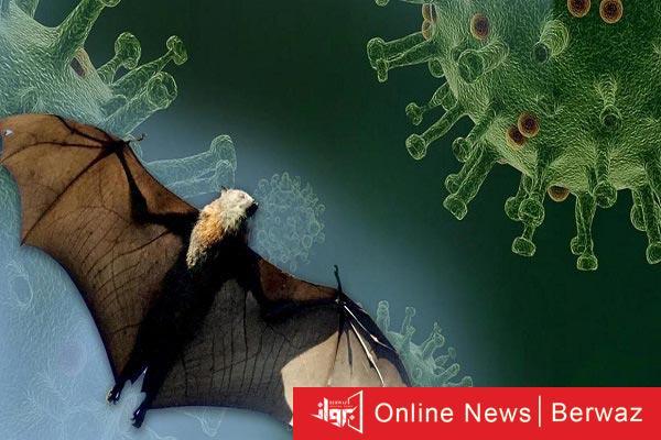 bats and coronavirus - الصين تعلن إكتشاف فيروس جديد مشابه للكورونا بسبب الخفافيش