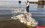 الهيئة العامة للبيئة ترفع غرامة مخالفة الصيد في الجون