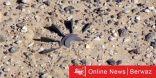 انفجار لغم يودي بحياة وافد في بالقرب من قاعدة أحمد الجابر