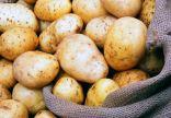 الحكومة المصرية توضح حقيقة وجود عجز في مخزون البطاطس