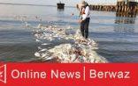 الكويت: إعلان بدء موسم الصيد في المياه الإقليمية