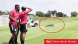فيديو – تمساح ضخم يقتحم تدريبات أحد الفرق في كندا !