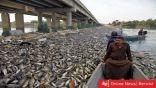 ظاهرة نفوق مئات الأطنان من الأسماك تعود إلى العراق