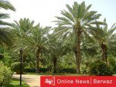 بيع أكثر من 4 آلاف نخلة بالمزاد في جنوب جنوب سعد العبدالله