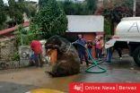 بالفيديو| العثور على فأر عملاق فى أنفاق الصرف الصحى بالمكسيك.. وصاحبته تطالب به