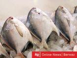 وزارة التجارة تحدد أسعار سمك الزبيدي في الأسواق