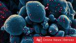 فيروس نيباه.. فترة حضانة تصل إلى 45 يوم وليس له علاج