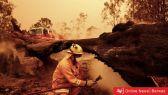 تقرير برواز: أستراليا تحترق….أكثر من نصف مليار حيوان ميت والنيران تلتهم كل شيء !