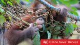السينما تنتقل للواقع علماء يزرعوا «جينات بشرية» في أمخاخ القرود.. والنتائج «مفاجئة»