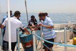 بالصور: هيئة البيئة تنظم زيارة توعوية  إلى جزيرة كبر