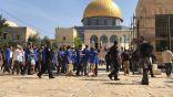 189 مستوطنًا إسرائيليًا يقتحمون «#الأقصى» بحراسة مشددة من شرطة الإحتلال